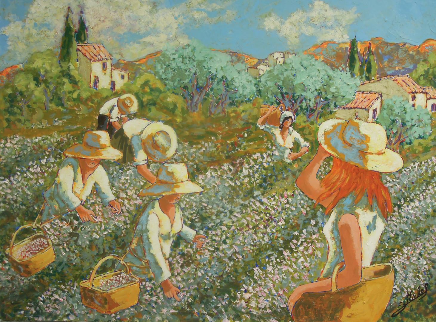 Gérard MICHEL - ceuillette du jasmin à Grasse